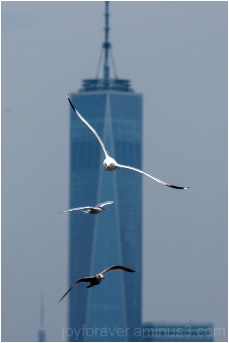 World-trade-center WTC seagull New-York-City NYC