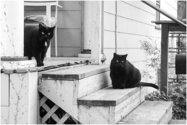 black cats Ithaca porch New-York pet animal