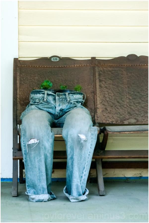 jeans pants trousers pottedplant porch ithaca NY