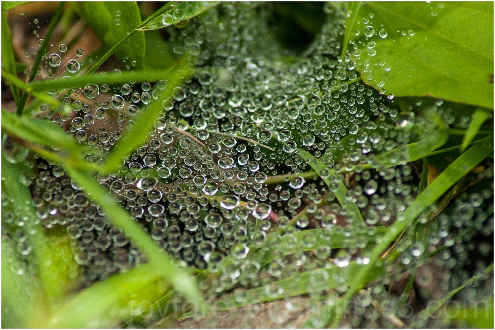 grass spider web water drops droplets spray Ithaca