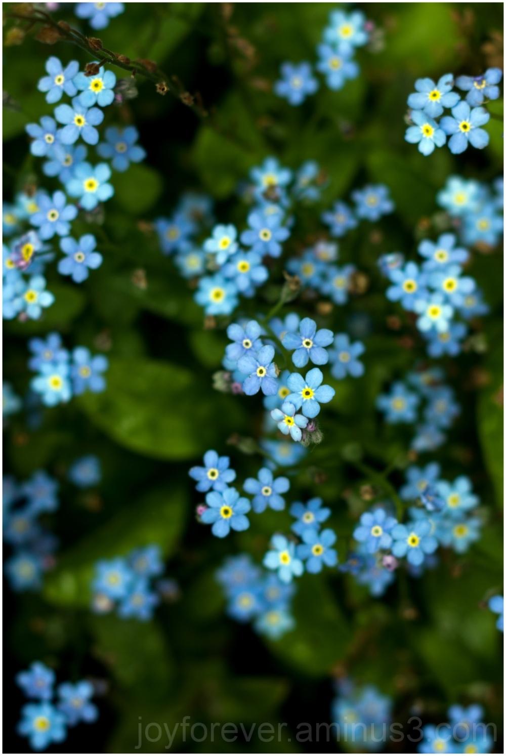 blue flower plant shallowDOF