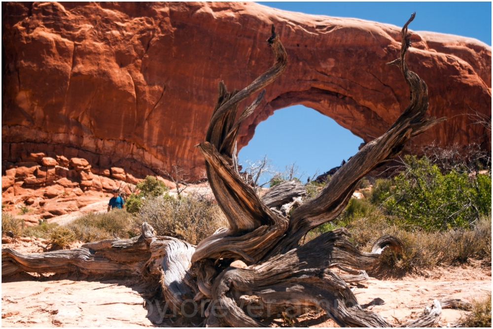 tree arch rocks mountain Arches-National-Park Utah