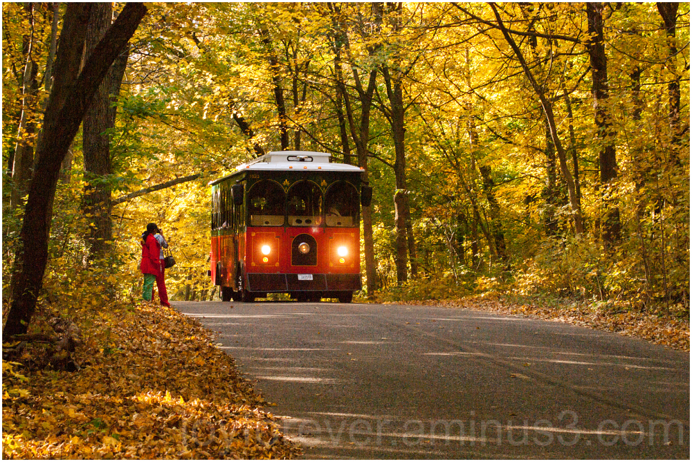 fall foliage arboretum Madison bus trolley yellow
