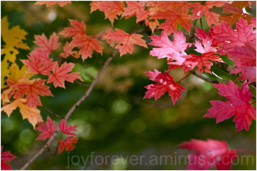 fall foliage arboretum Madison red leaves maple