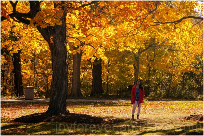 fall foliage maple tree yellow leaves woman autumn