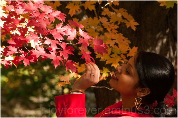 fall foliage maple tree leaves red yellow autumn