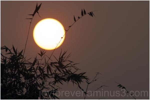 sun sunset bamboo plant Bengal India