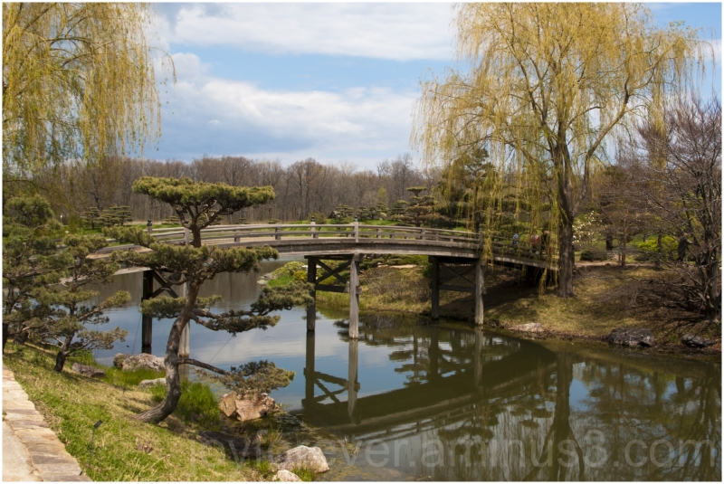 Japanese garden Chicago Botanic trees bridge water