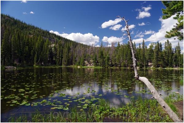 Nymph-Lake lake water mountain rocky colorado