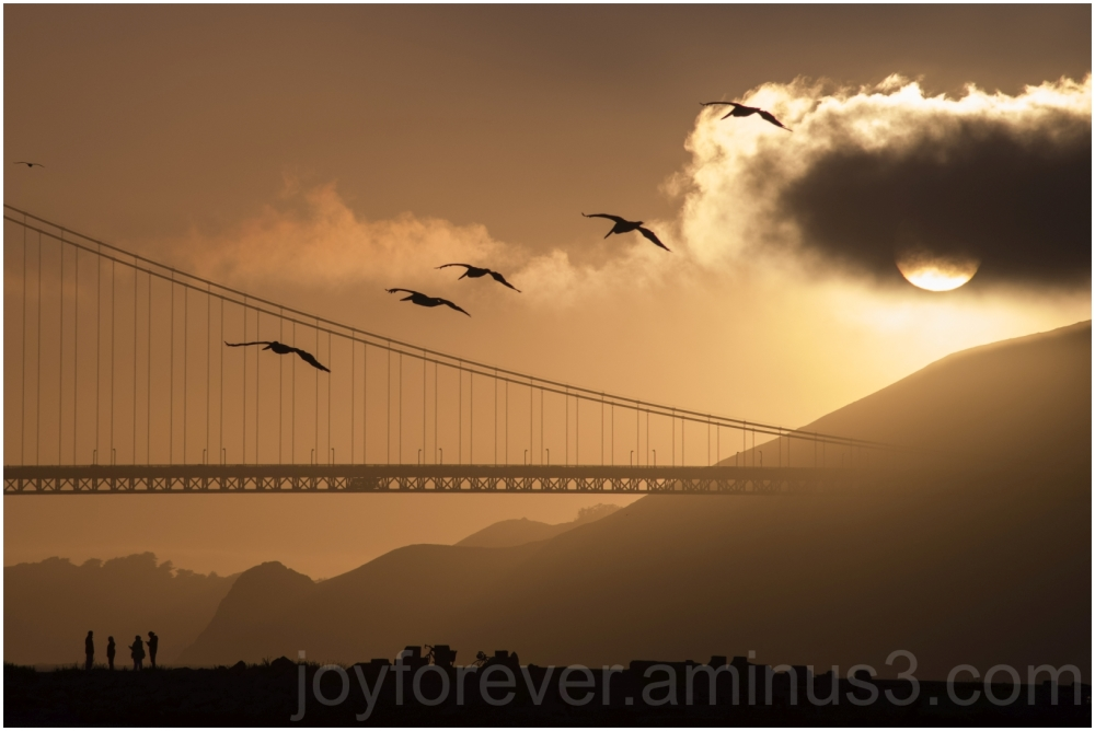 pelicans bird sunset GoldenGateBridge SanFrancisco