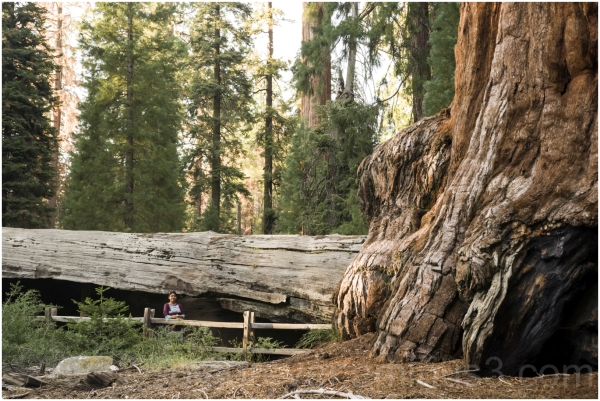 Giant Sequoia tree trunk stump woman KingsCanyon