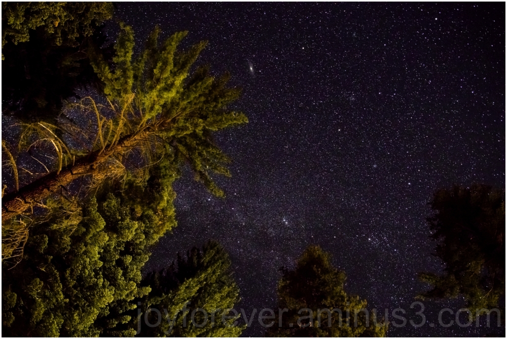 night sky stars galaxy milkyway trees kingscanyon
