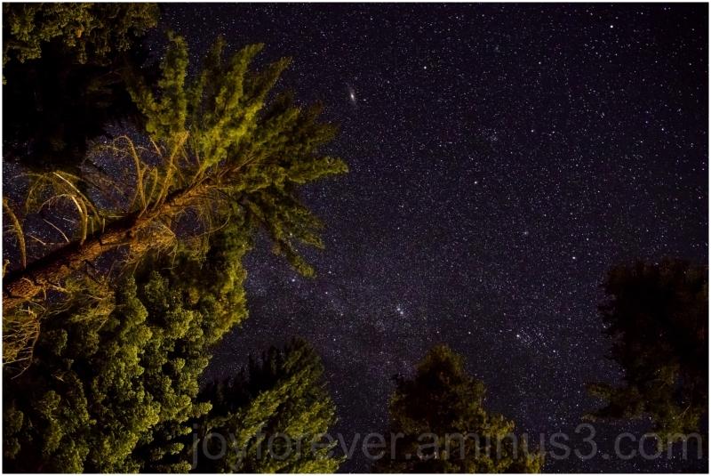 night sky stars galaxy milkyway trees kingscanyon