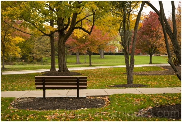 Fall autumn foliage trees leaves bench LakeForest