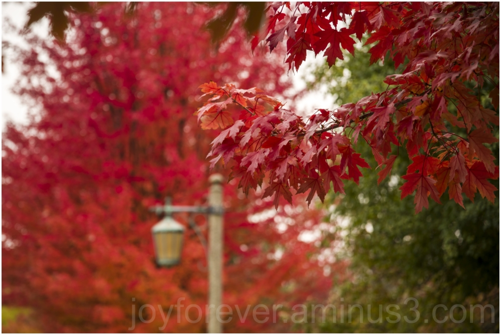 Fall autumn foliage trees leaves maple LakeForest