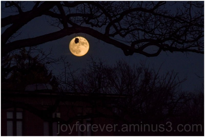 Moon supermoon fullmoon trees fall silhouette