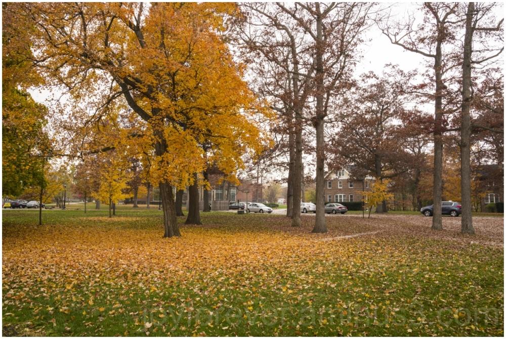 Fall autumn foliage trees leaves maple LakeForest