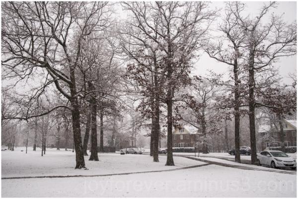 snow winter weather trees LakeForest Illinois