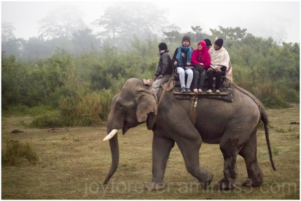 Elephant Safari Kaziranga assam India morning