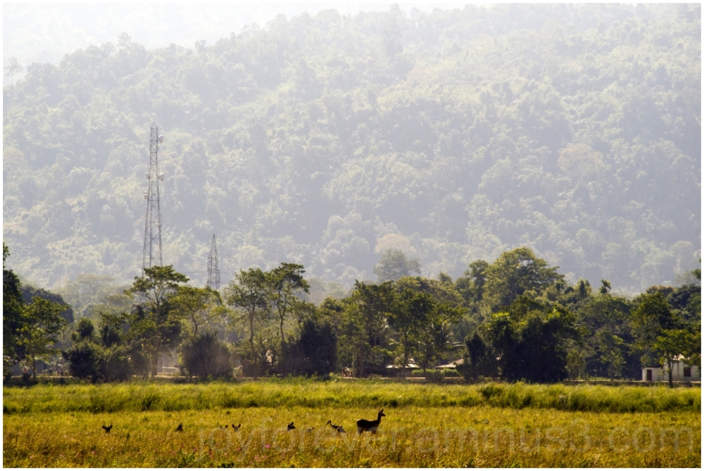 Kaziranga field grass deer Assam India Mountains