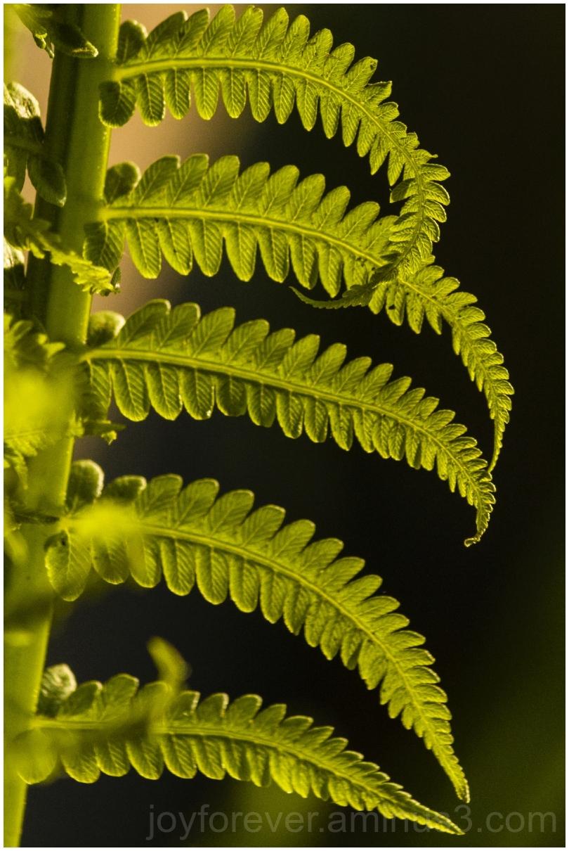 fern leaf frond spring green  plant