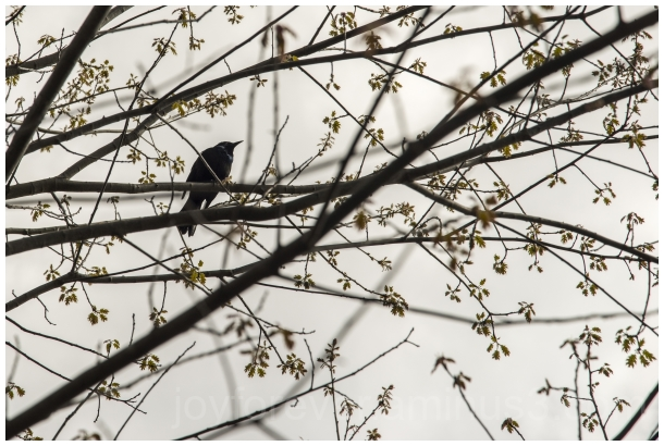 tree spring bird silhouette plant leaves branches