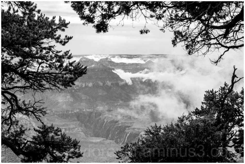 GrandCanyon Arizona clouds Black&White B&W trees
