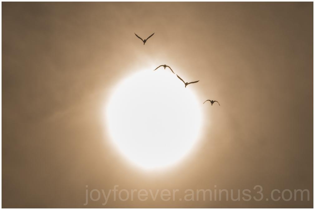 birds cormorants sun sunset sky silhouette