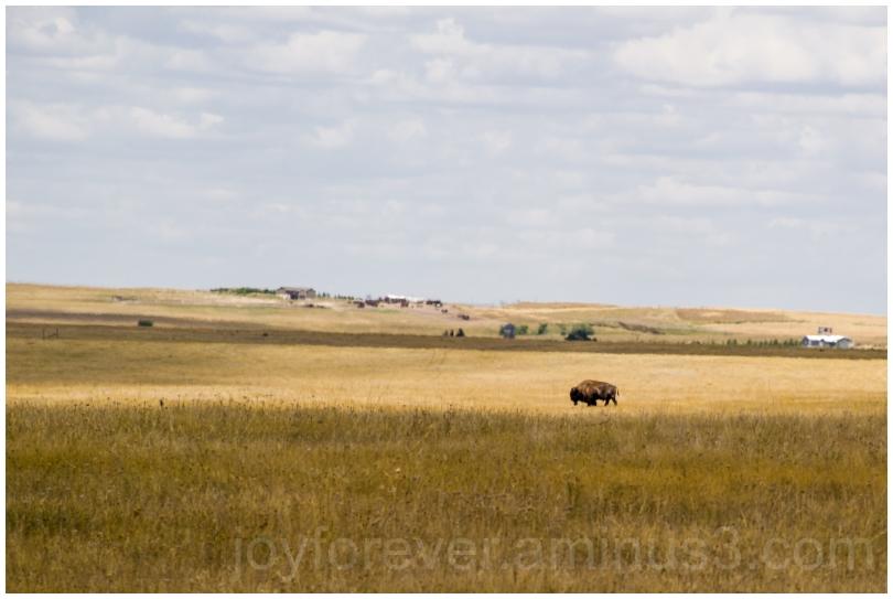 prairie grassland Badlands bison lonely SD