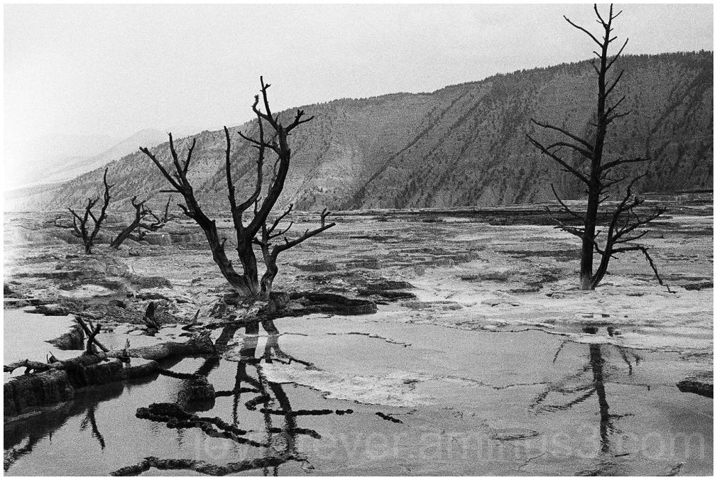 Yellowstone HotSprings B&W film Ilford Wyoming
