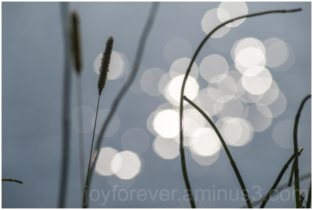 reed water sunset bokeh GrandTeton SnakeRiver WY