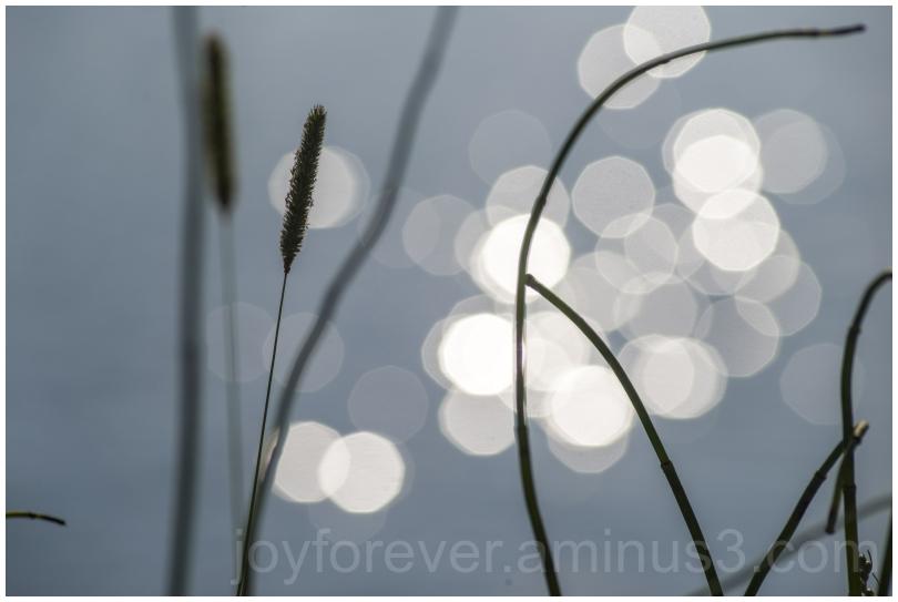 reed water sunset bokeh GrandTeton SnakeRiver WY