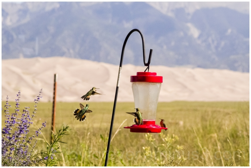 birds hummingbirds birdFeeder GreatSandDunes CO