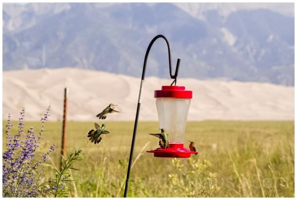 birds hummingbirds birdFeeder GreatSandDunes CO