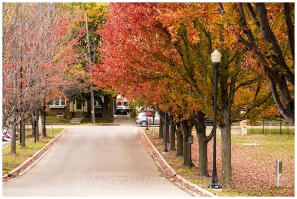 fall foliage maple leaves tree autumn