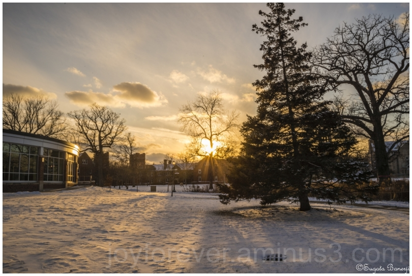 Winter snow landscape sunset LakeForest Illinois