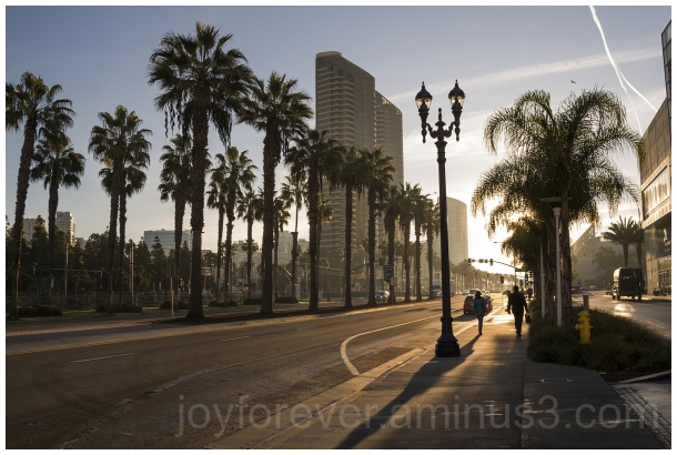 SanDiego California palmtree street trees sunlight