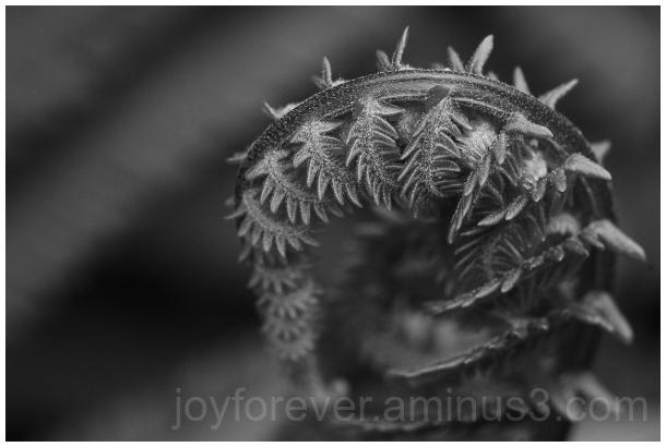 fern frond B&W Black&White plant leaf