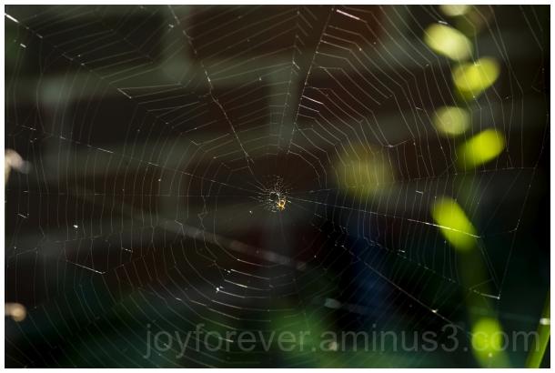 spider web arachnid insect macro nature cobweb