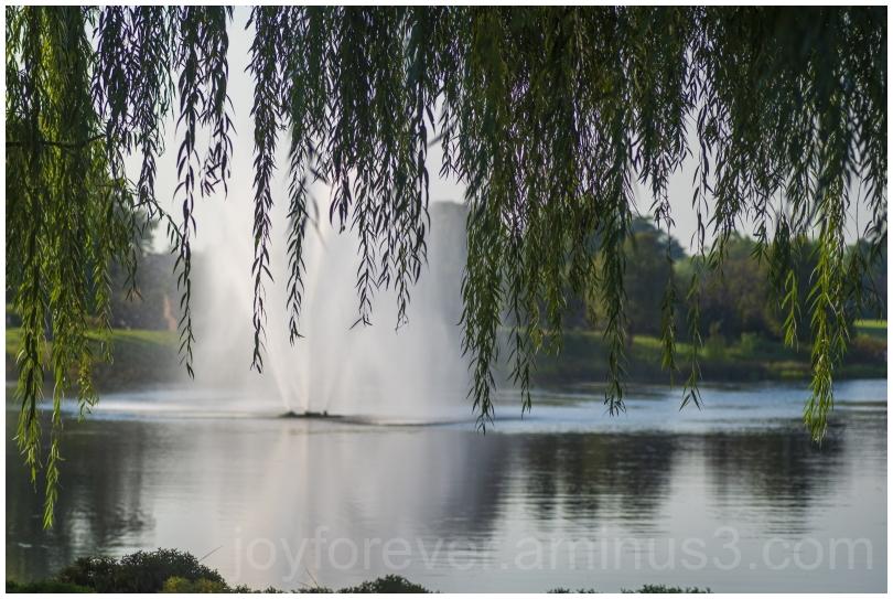 willow tree willowtree lake water botanicgarden