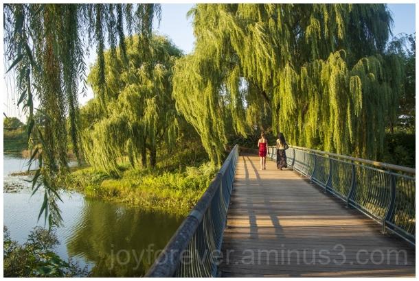willow tree willowtree bridge botanicgarden leaves