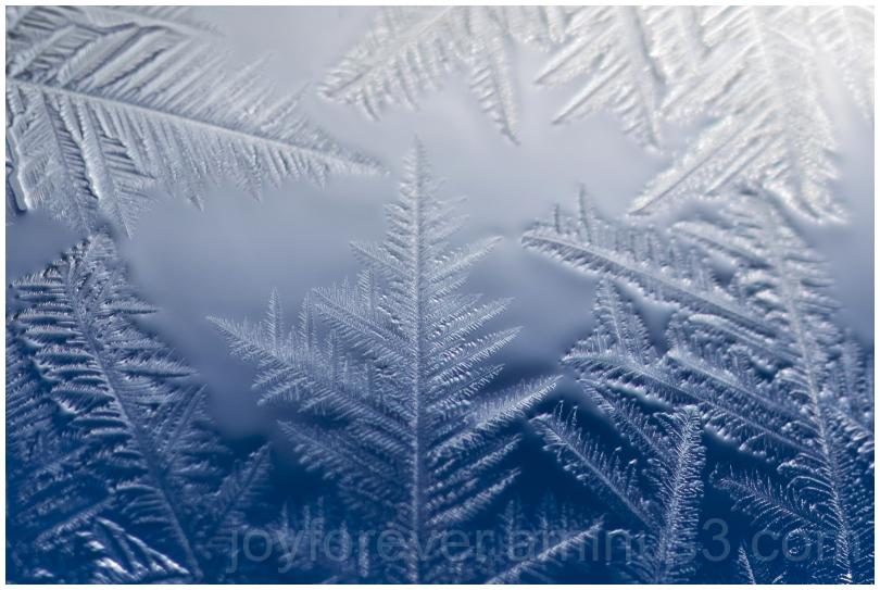ice crystals fractals soapbubble macro bubble cold