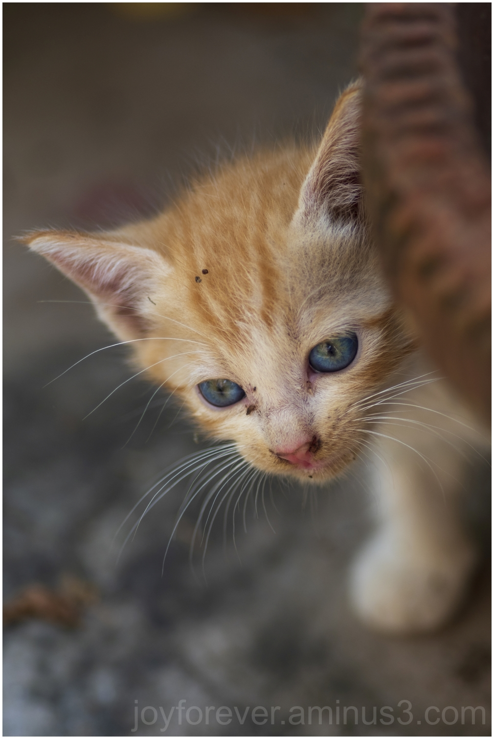 cat kitten animal baby garden Hooghly India