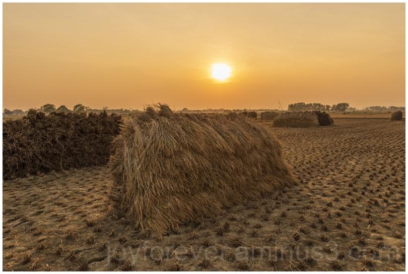 Haystack rice crop harvest field sunset village