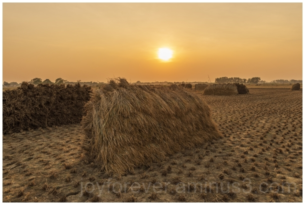 Haystack rice crop harvest field sunset village