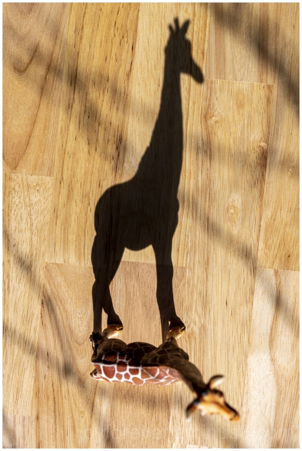 home2020 giraffe shadow stilllife toy
