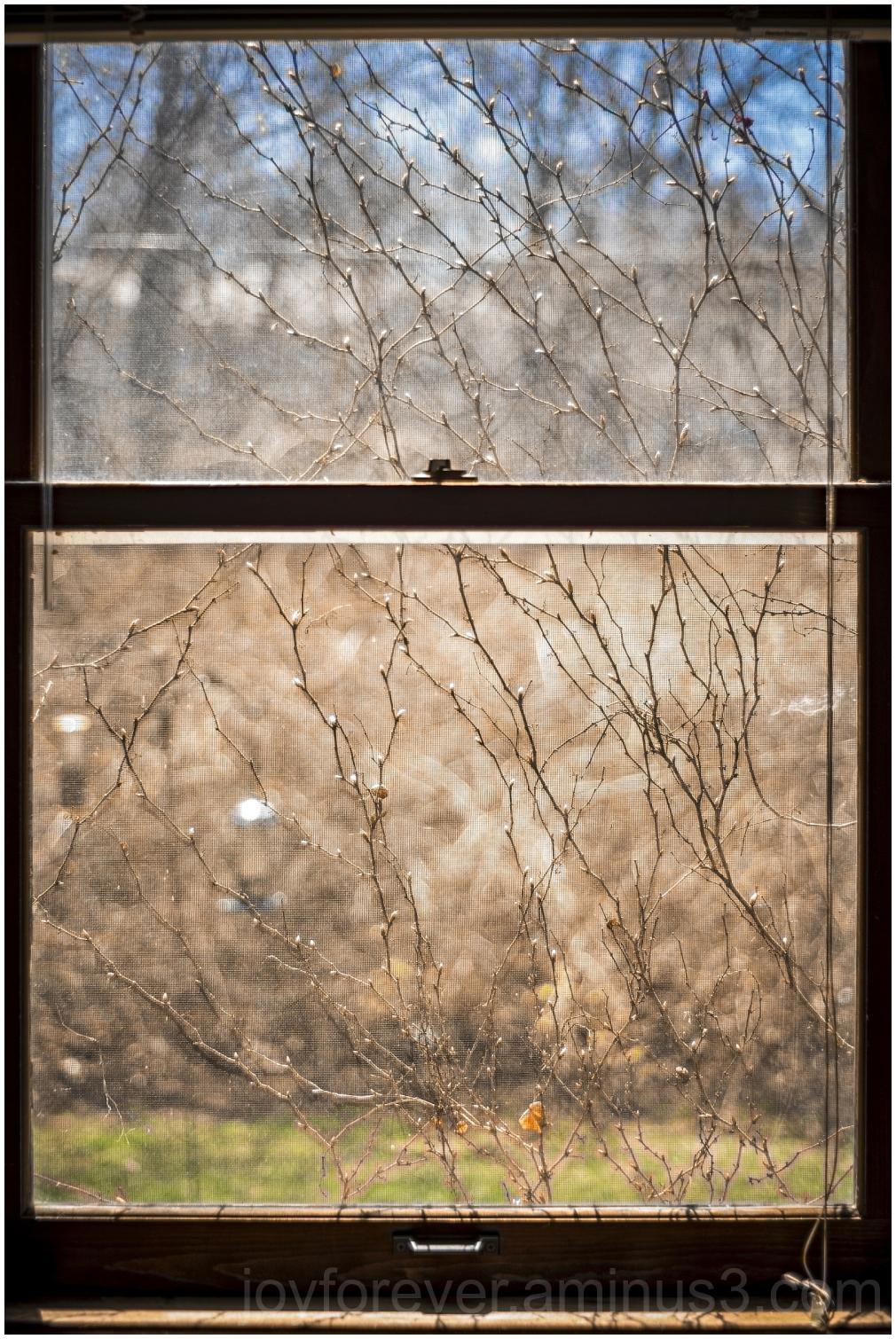 window ivy plant vine indoors spring backyard
