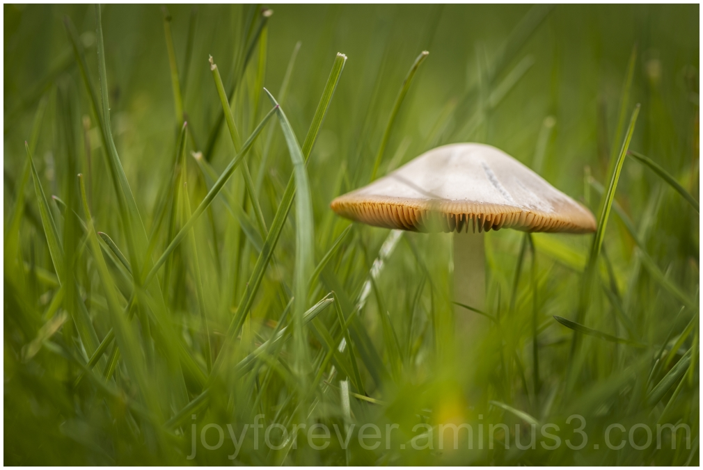 mushroom grass plant nature macro fungus toadstool
