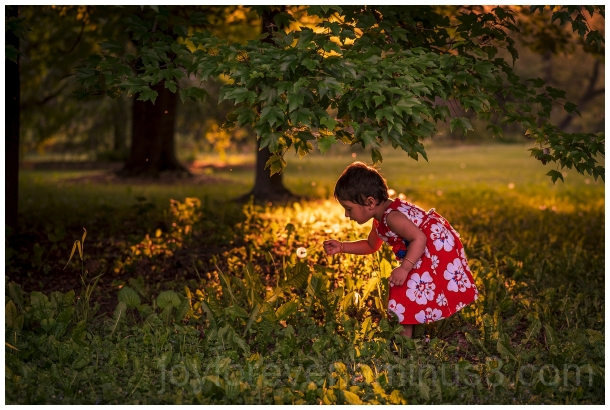 golden sunlight evening flower toddler child grass