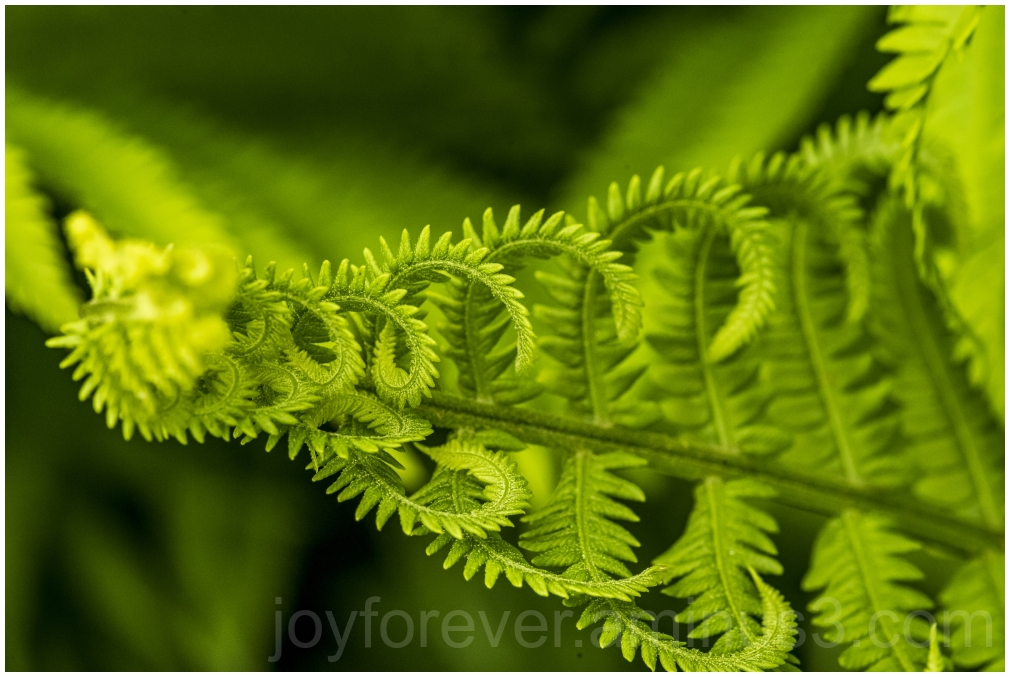 fern frond macro plant nature art fractal garden